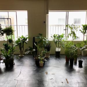 植物天国 開催中