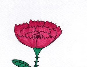 花言葉の運命