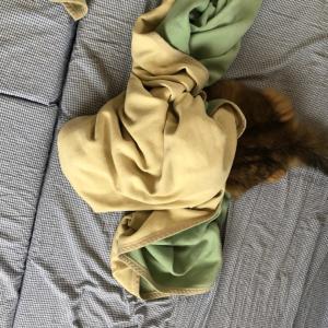 ふて寝するシルバーウィーク