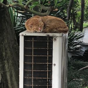 梅雨の外猫さん