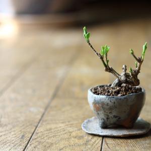 春の芽吹きや植え替えやら。