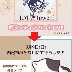 第3回保護猫カフェ支援募金ライブで予定してた曲をAMIはライブ配信します