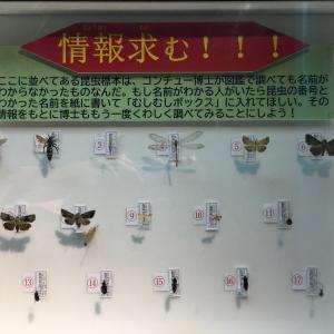 戸田川緑地でみつけた昆虫