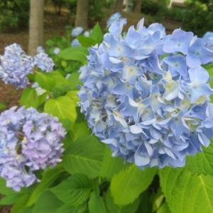 大阪城外堀の花々 (2020/05/30)