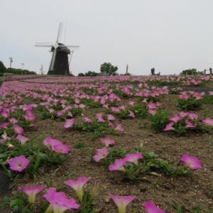 花博記念公園の花 (2020/06/05)