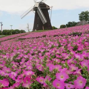 花博記念公園の花 (2020/06/28)