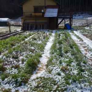 自然菜園スクール『自然菜園 自給自足コース』1泊2日 果樹の定植