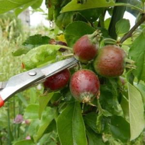 無農薬・自然果樹園への挑戦