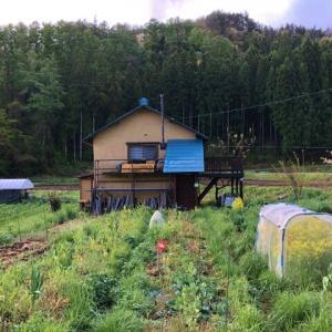 穀雨のような雨の後の自然菜園