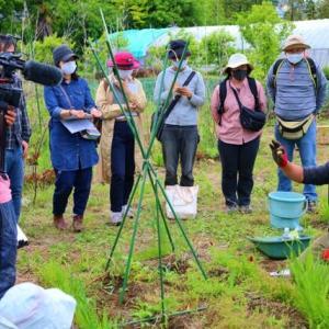 オンラインでも受講できる 自然菜園入門コース「夏野菜の植え付け、支柱と誘引、種まきと間引き」