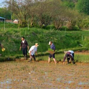 【一般無料版】自然菜園スクール『自然稲作コース』いよいよ田植え テーマ:田植え前後の野良仕事