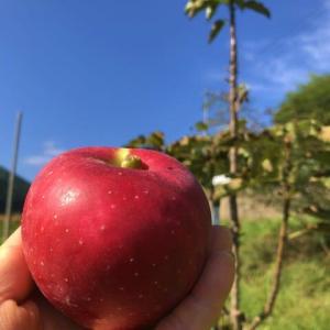 今年最後の見学会を前に、秋の収穫「奇跡のリンゴ」、9年ぶりの自然菜園「キッチンガーデン」大改造中~。