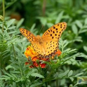 ベストモーメントキャプチャーで蝶の飛翔