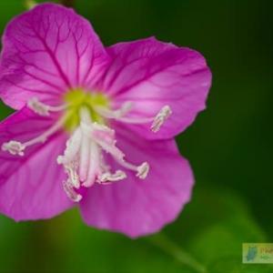 花壇の花めぐり