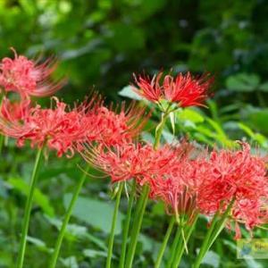 北本自然観察公園・秋の花