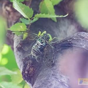 自然界の厳しさ(カマキリの捕食シーン)