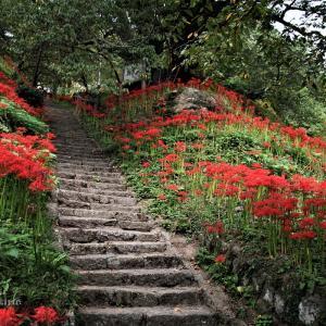 仏隆寺の彼岸花が綺麗!