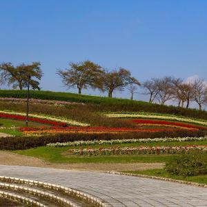 馬見丘陵公園・秋の花々