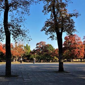 奈良公園も紅葉に・・・