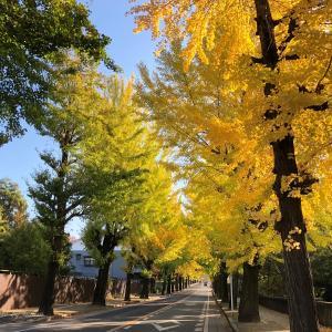 銀杏並木の黄葉