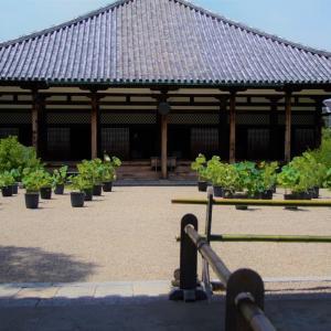 奈良町元興寺さんの蓮と桔梗と捩花
