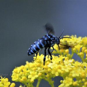 幸せを呼ぶ青い蜂💙