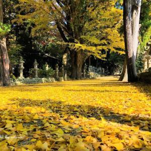 名張市・積田神社の銀杏の参道🍂