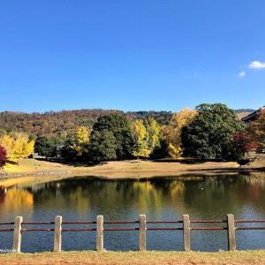 奈良公園の紅葉・黄葉🍂