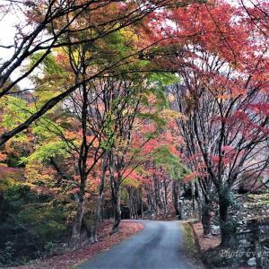 天開山泰運寺の紅葉🍂