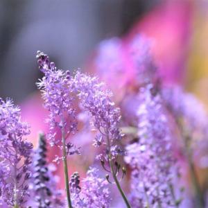 ツルボの花がいっぱい!