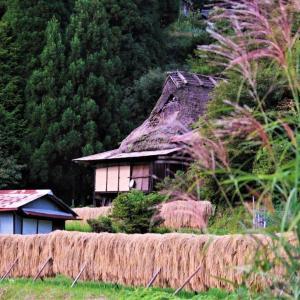 稲架掛けの風景