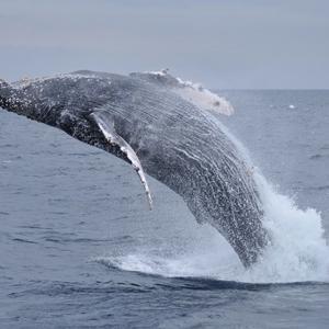 「ようやくクジラに!」