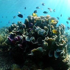 「サンゴ&生物調査」