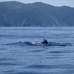 「なっなんとクジラが!!」