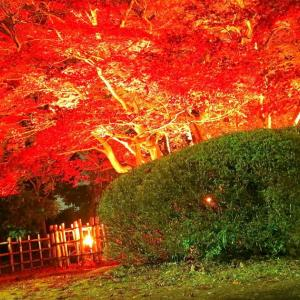 旧下田邸書院及び庭園(群馬県指定重要文化財)の紅葉の写真を載せてみる 高崎市箕郷町西明屋