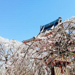 「しだれ桜の慈眼寺」を、honor9で撮影してきた。