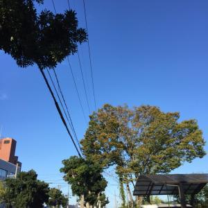 秋の朝ん歩ってか♡︎(°´ ˘ `°)/