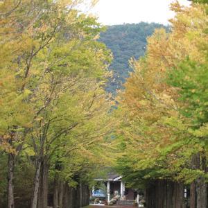 2日のお参りと公園散歩っぽってか♡︎(°´ ˘ `°)/