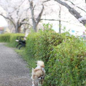 前の公園に夕方散歩ってか(๑•ᴗ•๑)♡
