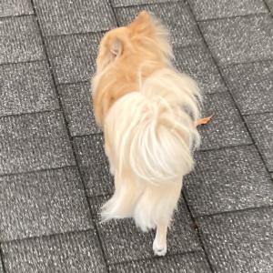 雨間に散歩っぽってか( ﹡・ᴗ・ )b