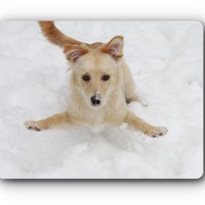 靴下完成!&雪の中 犬と戯れる
