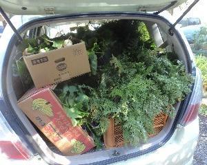 今年後半の野菜出荷開始☆