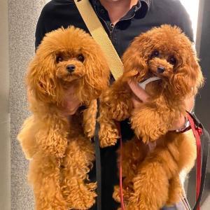 イギリスで愛犬に生肉と骨を与えている飼い主が増えている件