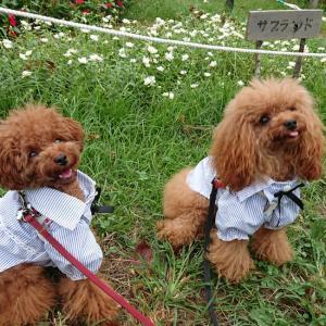 【愛犬と】お台場の海浜公園とビルズ、代々木公園に行ってきた