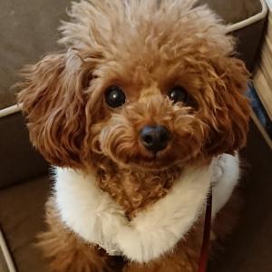 愛犬を連れて早く旅行に行きたい(GoToは感染拡大に関係なかった?)