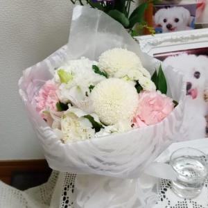 お花をありがとう&どっちだ?(笑)