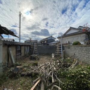 庭木の撤去から始まりました。