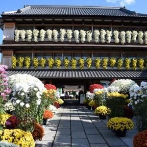 blog読者さん来る! その3 菊祭りとマルシェ編