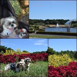 亜由奈、大好きな海浜公園に行って来ました!