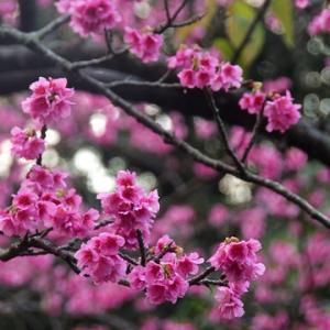 咲き始め♪